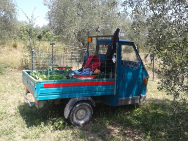 Piaggio Ape resting in shade of olive tree carrying vegetables