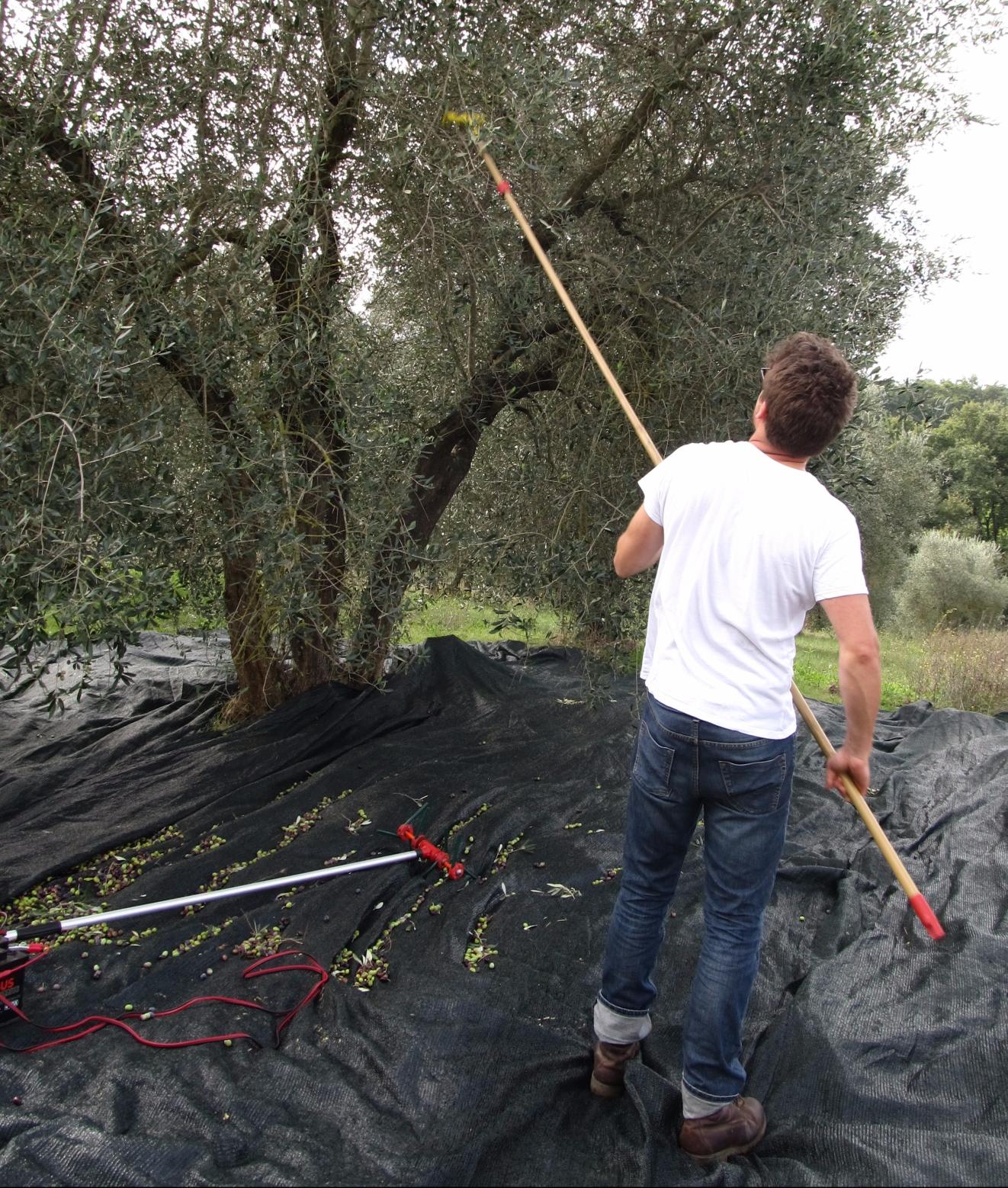 Tim Harvesting 12015-10-18